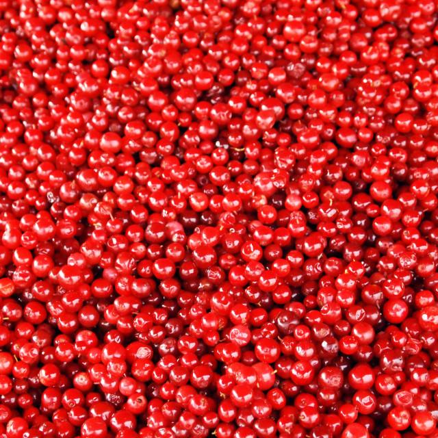 """""""Lingonberries"""" stock image"""