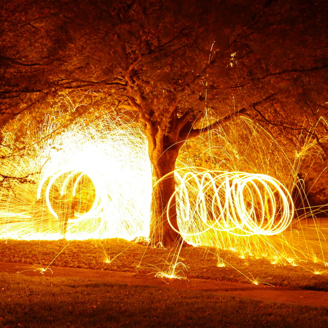 """Fire Tree"" stock image"