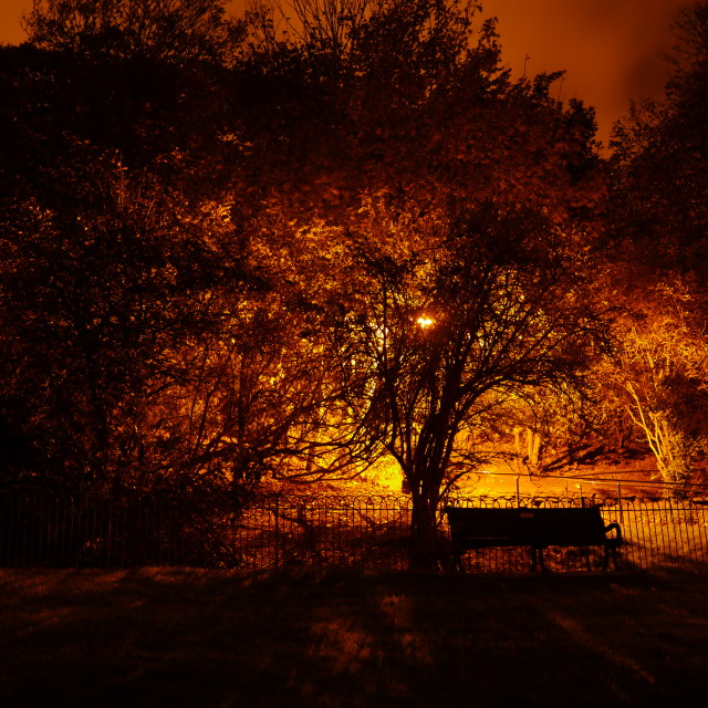 """Tree of Light"" stock image"