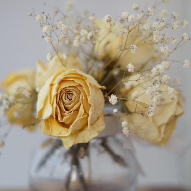 """""""Cream Roses"""" stock image"""