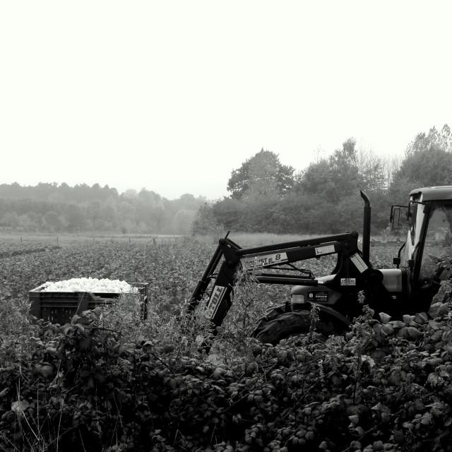 """Harvest II"" stock image"