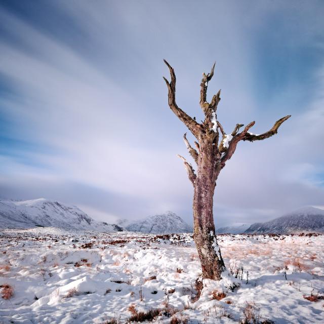 """Rannoch Moor Tree"" stock image"