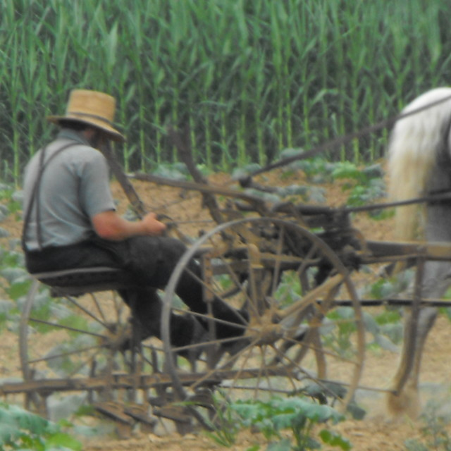 """Amish Plow"" stock image"