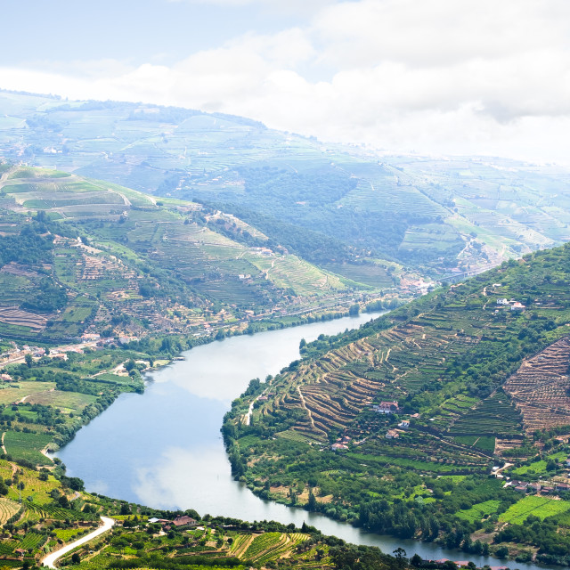 """Vineyars in Douro Valley"" stock image"