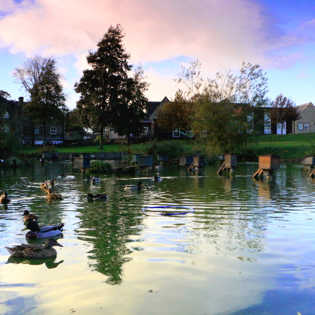 """Duck Pond"" stock image"