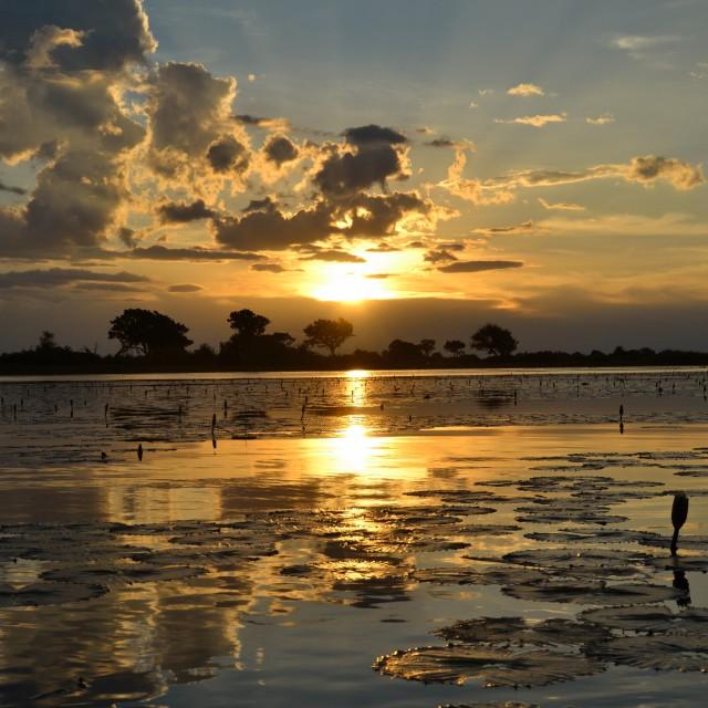 """""""Okavango"""" stock image"""