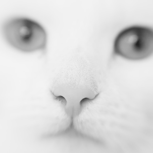 """Cat's nose"" stock image"