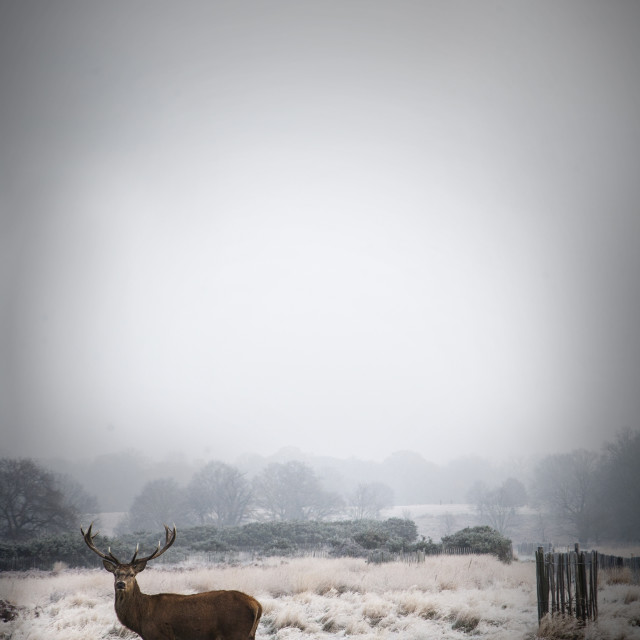 """Deer in the mist"" stock image"