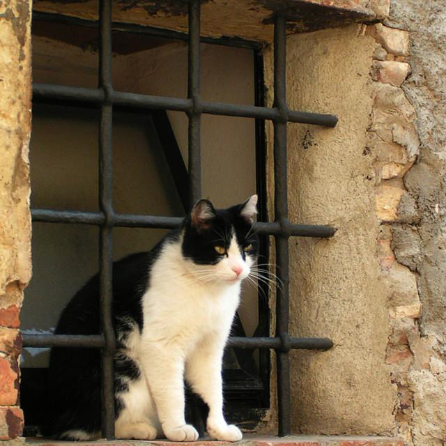 """Skewered Tuscan cat"" stock image"