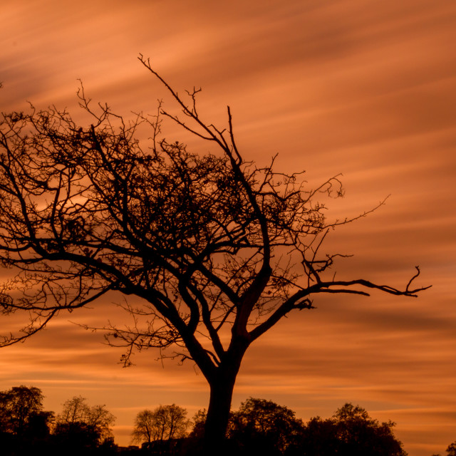 """Sunset in Brockwell Park"" stock image"
