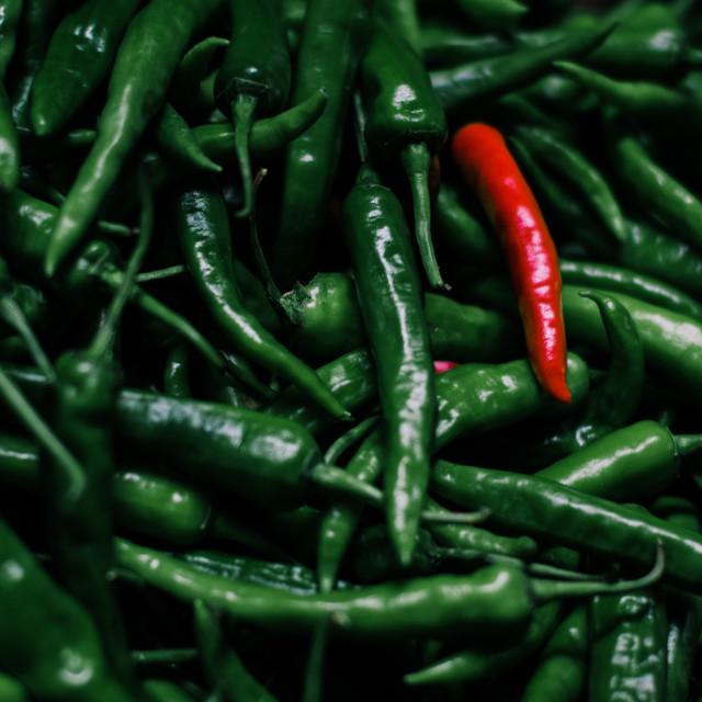 """Red Chilli Green Chilli"" stock image"