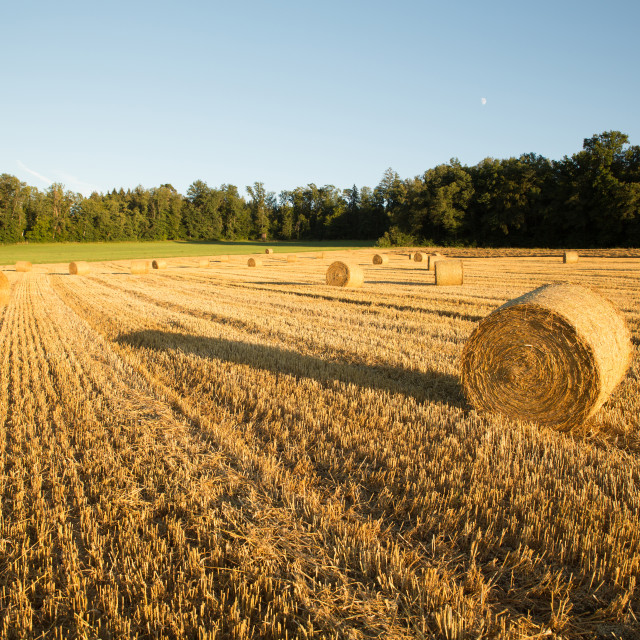 """""""Evening after the Harvest"""" stock image"""