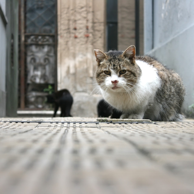 """""""Cats in the Cemetery"""" stock image"""