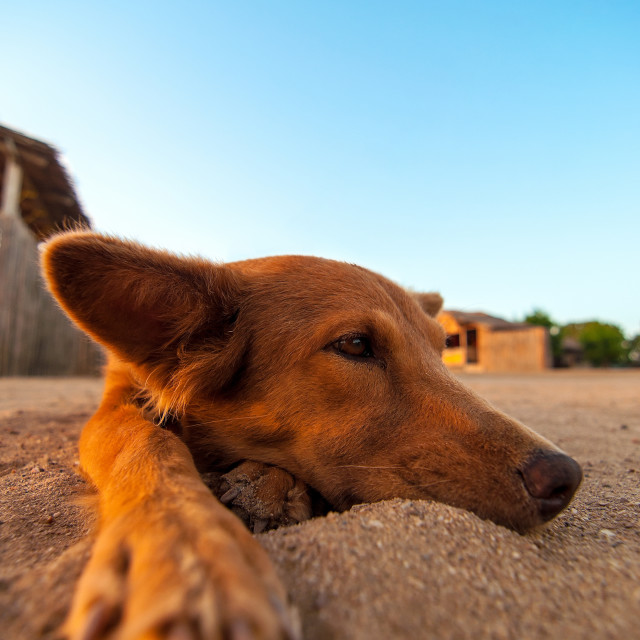 """""""Dog Relaxing on a Beach"""" stock image"""