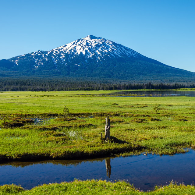 """Mount Bachelor and Meadow"" stock image"