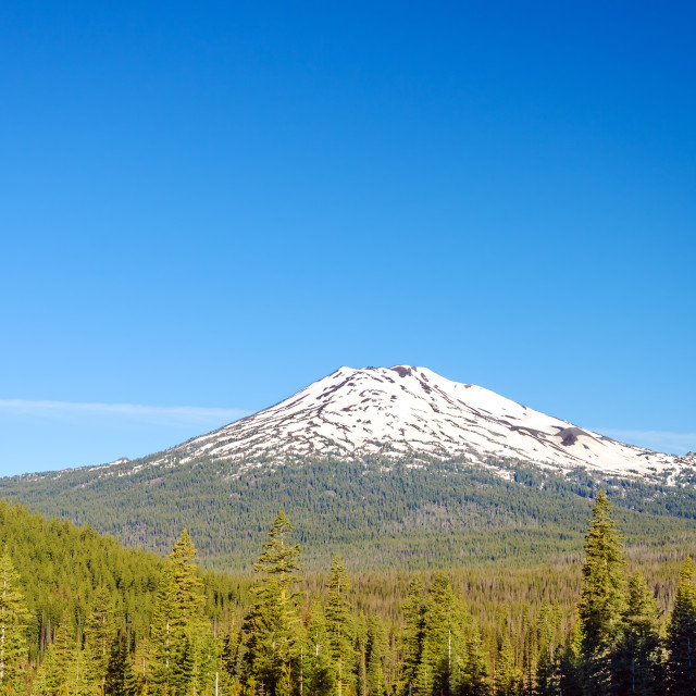 """Mount Bachelor and Forest"" stock image"