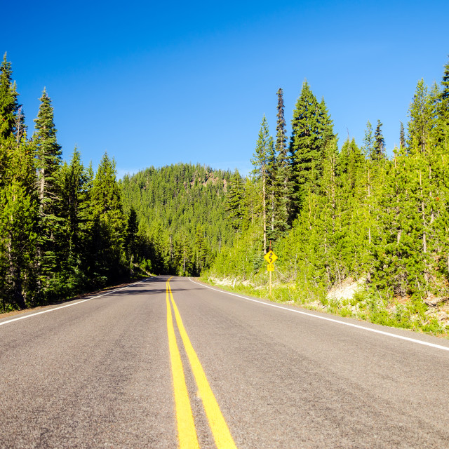 """Forested Highway"" stock image"