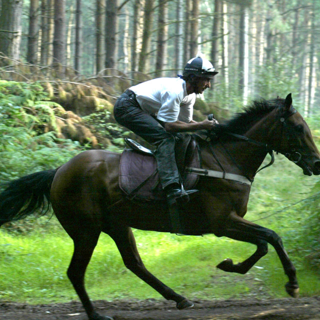 """Racehorse in the woods"" stock image"