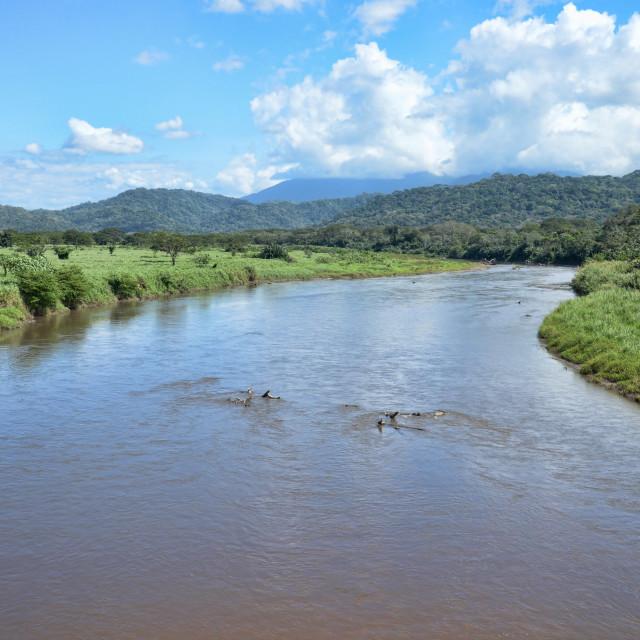 """Tarcoles River in Costa Rica"" stock image"