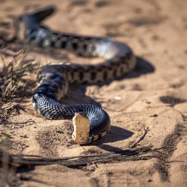"""Snake"" stock image"