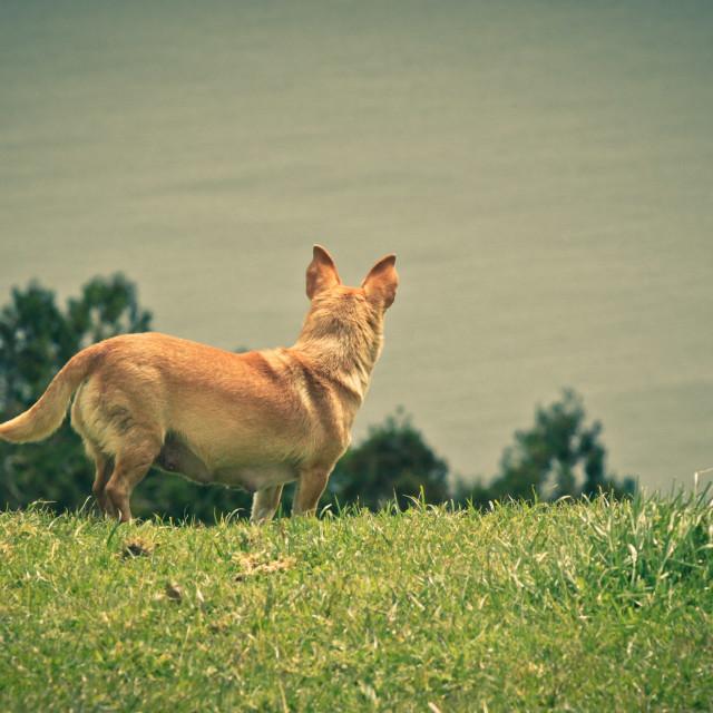"""Cute doggie"" stock image"