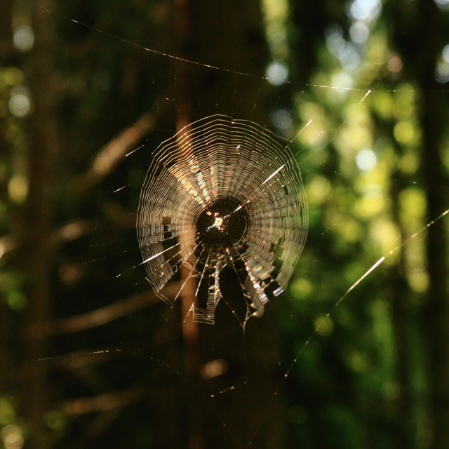 """Spider web"" stock image"