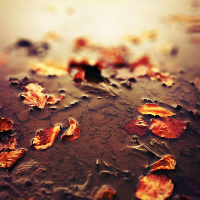 """Autum Leaves"" stock image"
