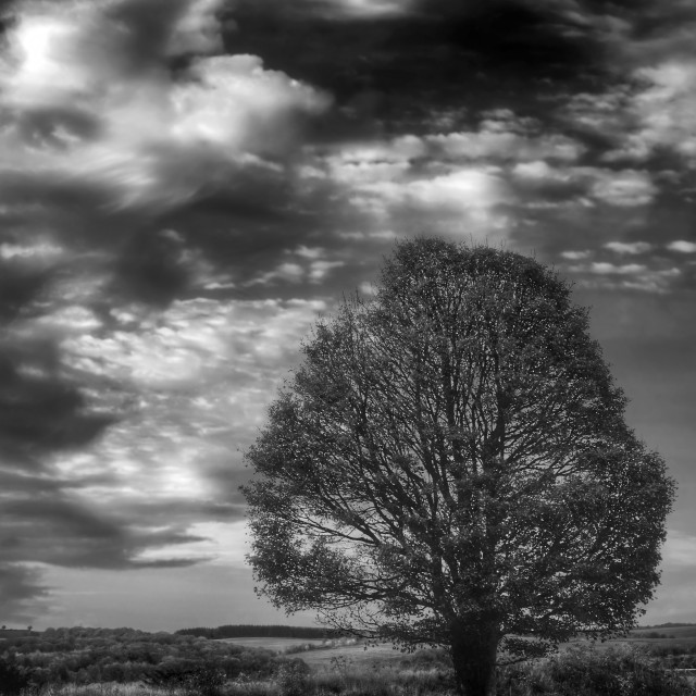 """An all alone tree"" stock image"