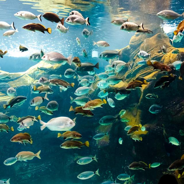 """""""Aquarium"""" stock image"""