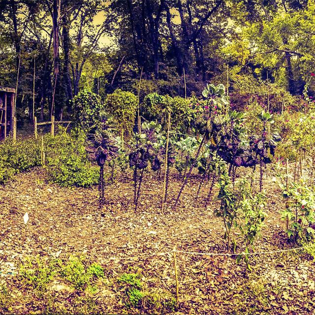 """Garden Panorama"" stock image"