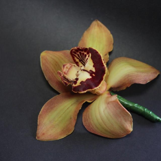 """""""Man Booker flower"""" stock image"""