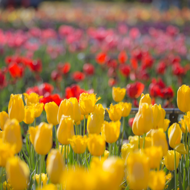 """Canberra Floriade"" stock image"