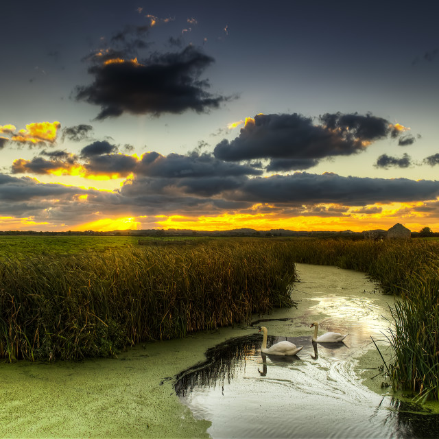 """Braunton Marsh North Devon"" stock image"