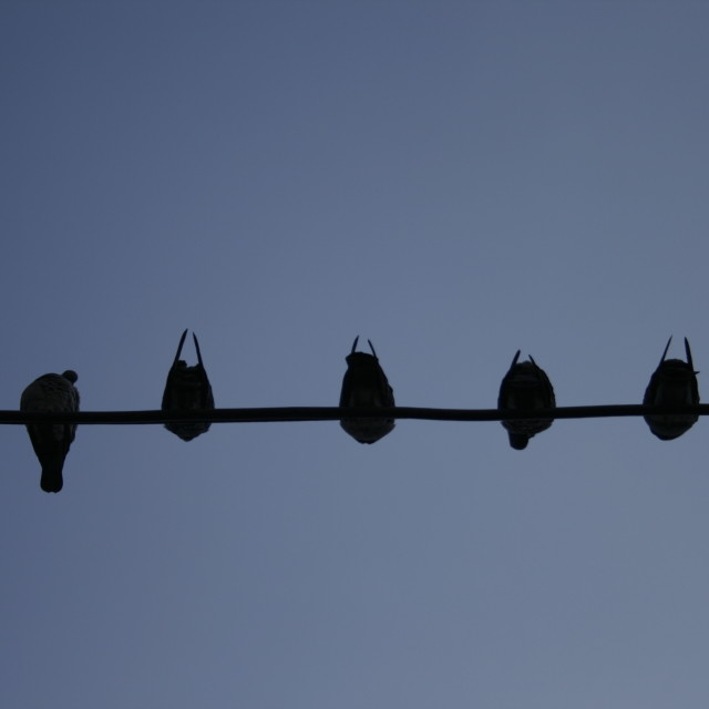"""Like a Bird on a Wire"" stock image"