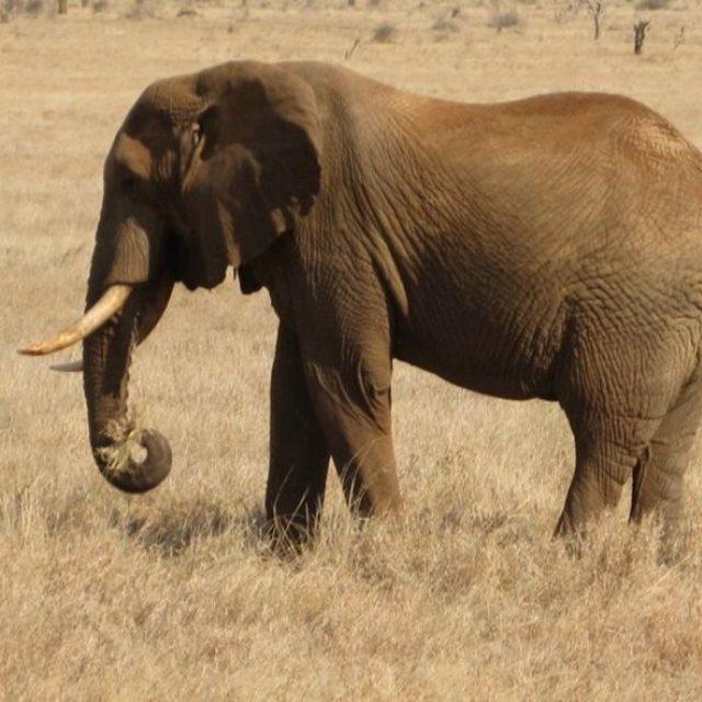 """""""Old Elephant"""" stock image"""