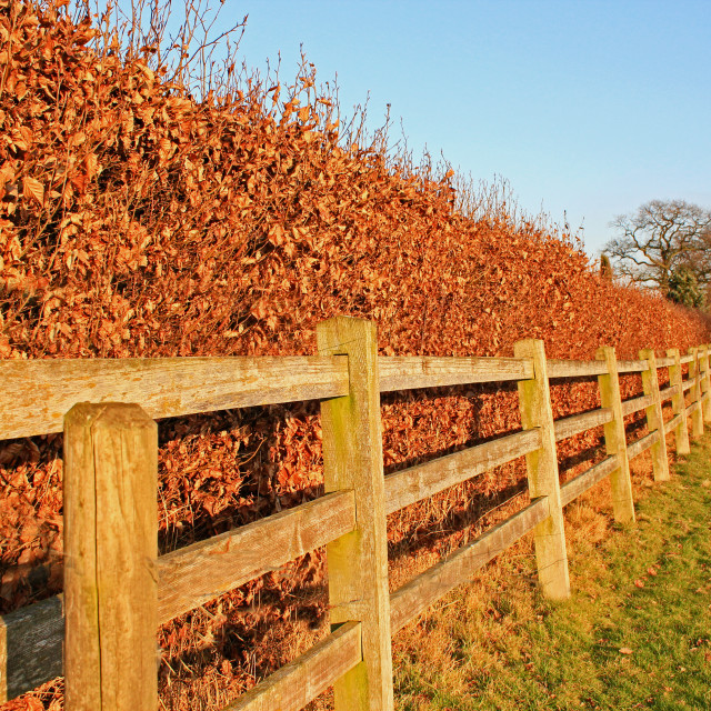 """The Long Fence"" stock image"