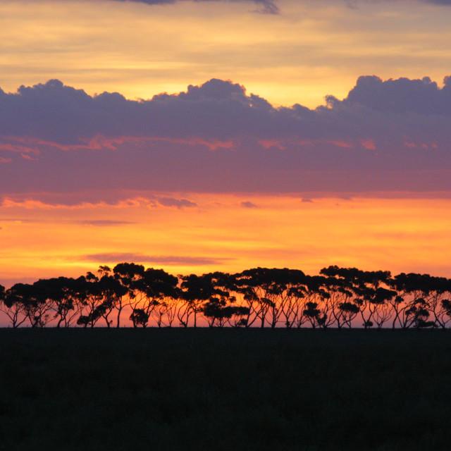 """Australian Sahara"" stock image"
