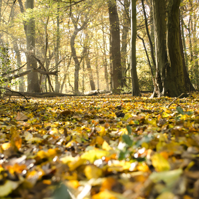 """Autumnal Leaves"" stock image"