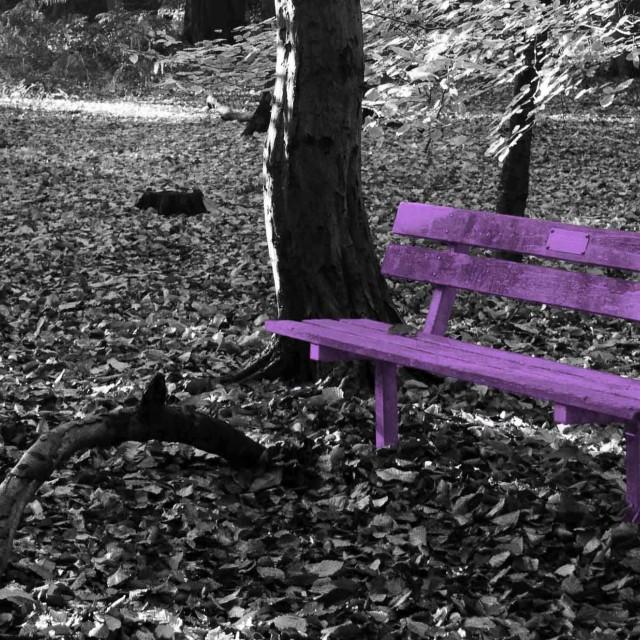 """Purple Bench"" stock image"