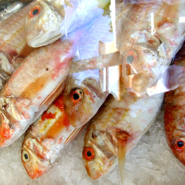 """Fish For Sale2"" stock image"