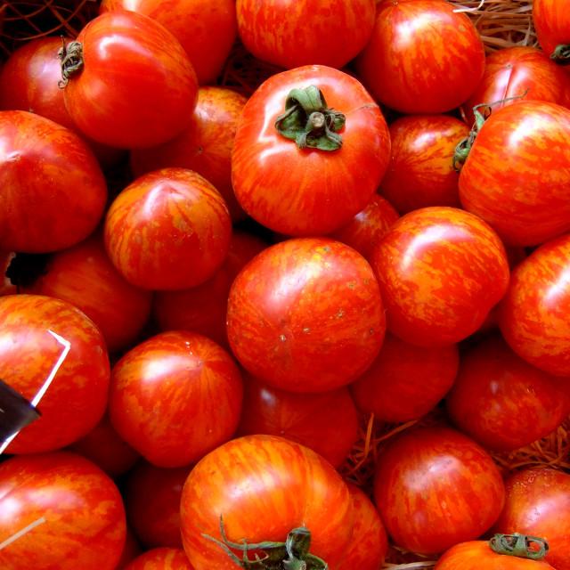 """Zebra Tomatoes"" stock image"