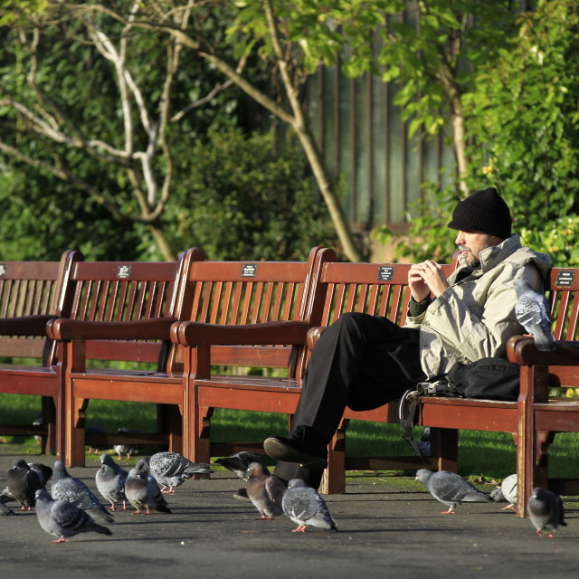 """Lunch with the pigeons"" stock image"