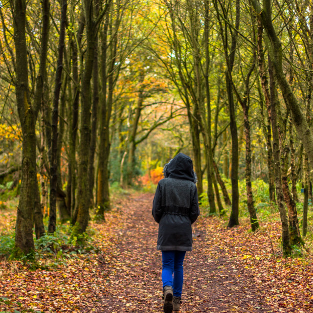 """Autumnal woodland stroll"" stock image"