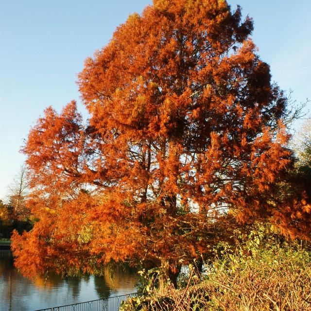 """Autumn Splendor"" stock image"
