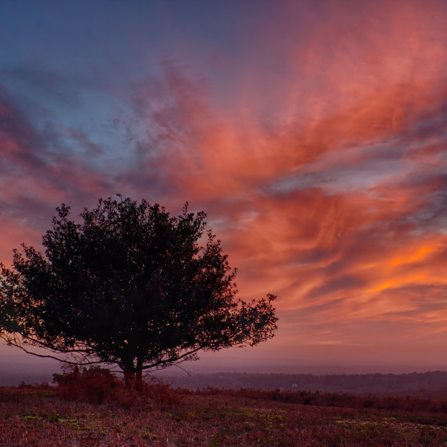 """Lone Tree At Sunset"" stock image"