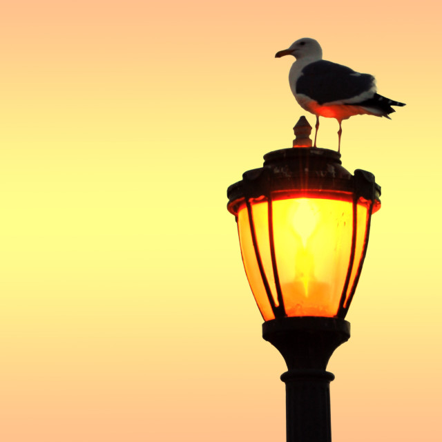 """Seagull on a street light"" stock image"
