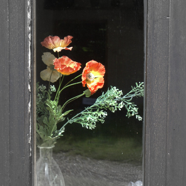 """Poppies in the Window"" stock image"