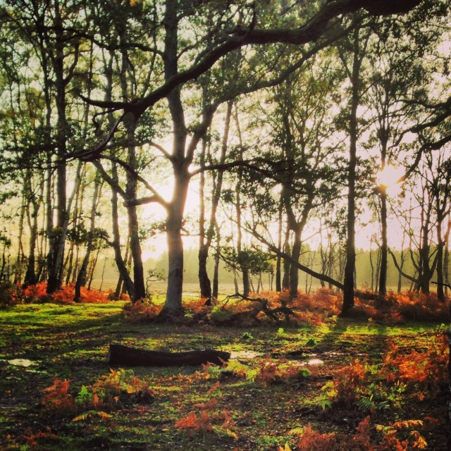"""New Forest"" stock image"