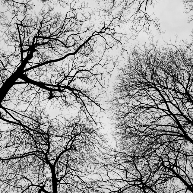 """Bare Trees"" stock image"