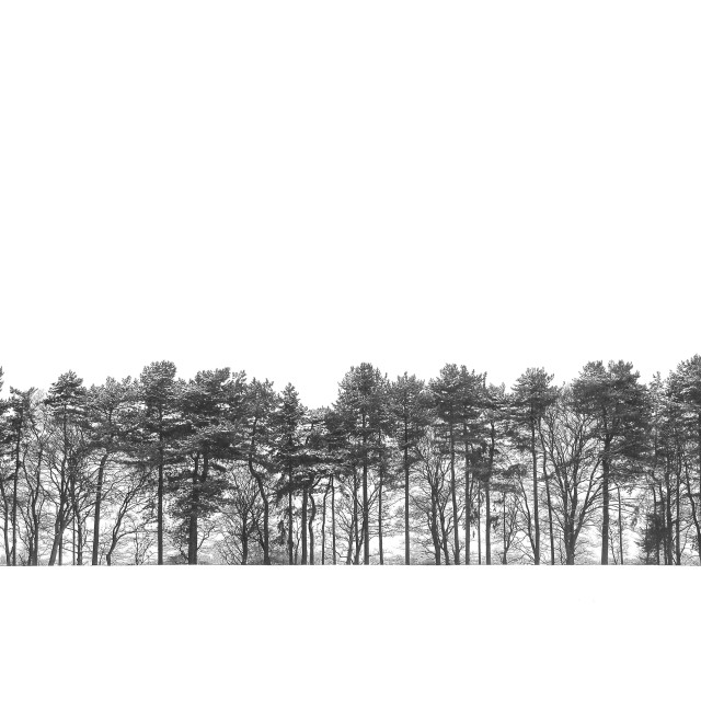 """Frozen line of trees"" stock image"